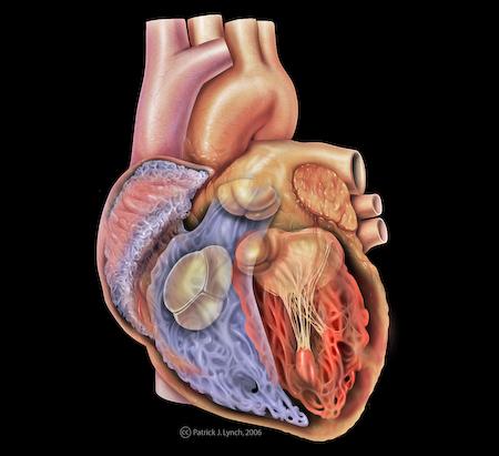 Ce este inima?